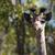 bebê · girafa · retrato · cabeça · pescoço · África - foto stock © davemontreuil