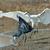 посадка · забастовка · рыбы · природы · птица · Африка - Сток-фото © davemontreuil