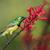 néctar · feminino · flor · pássaro · África - foto stock © davemontreuil