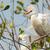 vee · zoeken · vogel · permanente · materiaal - stockfoto © davemontreuil