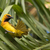 mannelijke · staart · veren · natuur · palm - stockfoto © davemontreuil