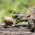 dobradiça · tartaruga · forma · Malavi · gigante · africano - foto stock © davemontreuil
