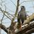 caça · floresta · sangue · pássaro · poder · branco - foto stock © davemontreuil