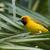 pálma · férfi · természet · madár · Afrika · profil - stock fotó © davemontreuil