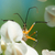 merénylő · rovar · zöld · növény · levél · rovar - stock fotó © davemontreuil