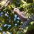 galamb · fa · madár · portré · Afrika · állat - stock fotó © davemontreuil