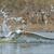 ar · mergulho · água · pássaro · África - foto stock © davemontreuil