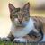 maison · chat · regarder · directement · lumière - photo stock © davemontreuil