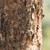 onzichtbaar · hagedis · boom · afrika · dier · milieu - stockfoto © davemontreuil
