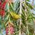 アフリカ · 黄色 · 花 · 鳥 · アフリカ · 動物 - ストックフォト © davemontreuil