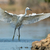 aterrissagem · gaivota · pássaro · areia · voar · animal - foto stock © davemontreuil