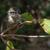 young green vervet monkey stock photo © davemontreuil