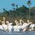 白 · 水 · 美しい · いい - ストックフォト © davemontreuil