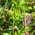 Stick · кузнечик · хорошо · скрытый · красивой · насекомое - Сток-фото © davemontreuil