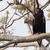 орел · Scary · зомби · природы · птица · Африка - Сток-фото © davemontreuil