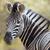 Afrika · hát · száj · szőr · szafari · közelkép - stock fotó © davemontreuil