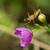 assassino · bicho · verde · planta · folha · inseto - foto stock © davemontreuil