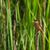 malaquita · martim-pescador · pássaro · África · legal · belo - foto stock © davemontreuil