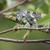 retrato · camaleão · mão · olho · caminhada · África - foto stock © davemontreuil