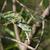 a chameleon chamaeleo senegalensis slowly reaching for the nex stock photo © davemontreuil