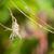 spider · web · nero · rosolare · zampa - foto d'archivio © davemontreuil