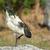 boca · aberta · em · pé · um · em · pássaro - foto stock © davemontreuil