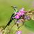 jonge · mannelijke · mooie · profiel · zoete · mooie - stockfoto © davemontreuil