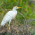 vee · zoeken · natuur · vogel · afrika · mooie - stockfoto © davemontreuil