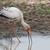 cigogne · Bill · alimentaire · eau · bois · oiseau - photo stock © davemontreuil