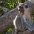 maymun · üç · monkeys · park · ağaç · yüz - stok fotoğraf © davemontreuil