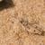 グラスホッパー · ブレード · 草 · 葉 · 緑 - ストックフォト © davemontreuil