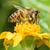 abeille · rassemblement · pollen · fleur · travailleur - photo stock © davemontreuil