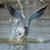 bom · salpico · ar · mergulho · água - foto stock © davemontreuil