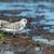 pequeño · gaviotas · arena · de · la · playa · búsqueda · alimentos · naturaleza - foto stock © davemontreuil
