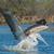 vôo · pescaria · peixe · natureza · pássaro · África - foto stock © davemontreuil