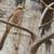 madár · fiskális · felső · fa · szemek · zöld - stock fotó © davemontreuil