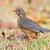 pamukçuk · yaprak · bahçe · kuş · Afrika · hayvan - stok fotoğraf © davemontreuil