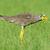 afrika · afrikaanse · vogels · evenwicht · profiel · permanente - stockfoto © davemontreuil