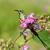 jonge · mannelijke · mooie · roze · bloemen · profiel - stockfoto © davemontreuil