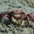 caranguejo · praia · água · natureza · mar · fundo - foto stock © davemontreuil