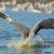natação · imagem · humanismo · pegadas · areia · mar - foto stock © davemontreuil