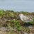 em · pé · alga · coberto · rochas · praia · natureza - foto stock © davemontreuil