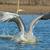 zwemmen · afbeelding · menselijke · voetafdrukken · zand · zee - stockfoto © davemontreuil