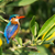malachite kingfisher alcedo cristata stock photo © davemontreuil