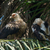two palm nut vultures in a palm tree stock photo © davemontreuil