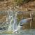 asas · bastante · impressionante · salpico · água · pássaro - foto stock © davemontreuil