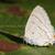 葉 · アフリカ · 昆虫 · アフリカ - ストックフォト © davemontreuil