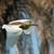 鷺 · 草で覆われた · 草 · 鳥 · アフリカ - ストックフォト © davemontreuil