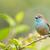 kék · ág · természet · madár · gyönyörű · környezet - stock fotó © davemontreuil