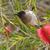 enforcamento · garrafa · escove · flor · árvore · natureza - foto stock © davemontreuil